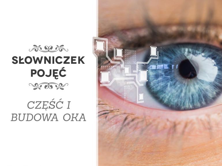 Budowa oka